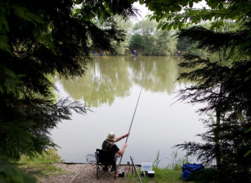 Pole fishing for F1's